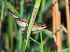 """Green Line warns bird reports inform hunters - """"Several new birds observed in Kuwait"""""""