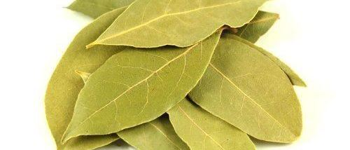 Cover Photo for Bay Leaf
