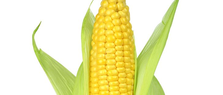 Cover Photo for Corn